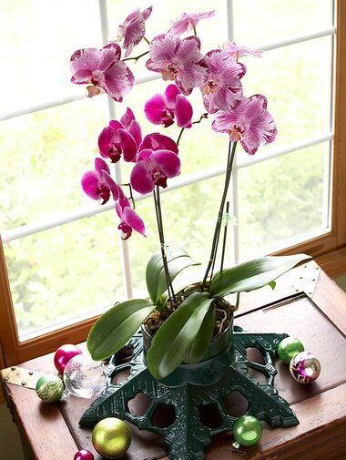 fb5f0e5f7a1fdb How to Grow Orchids Indoors