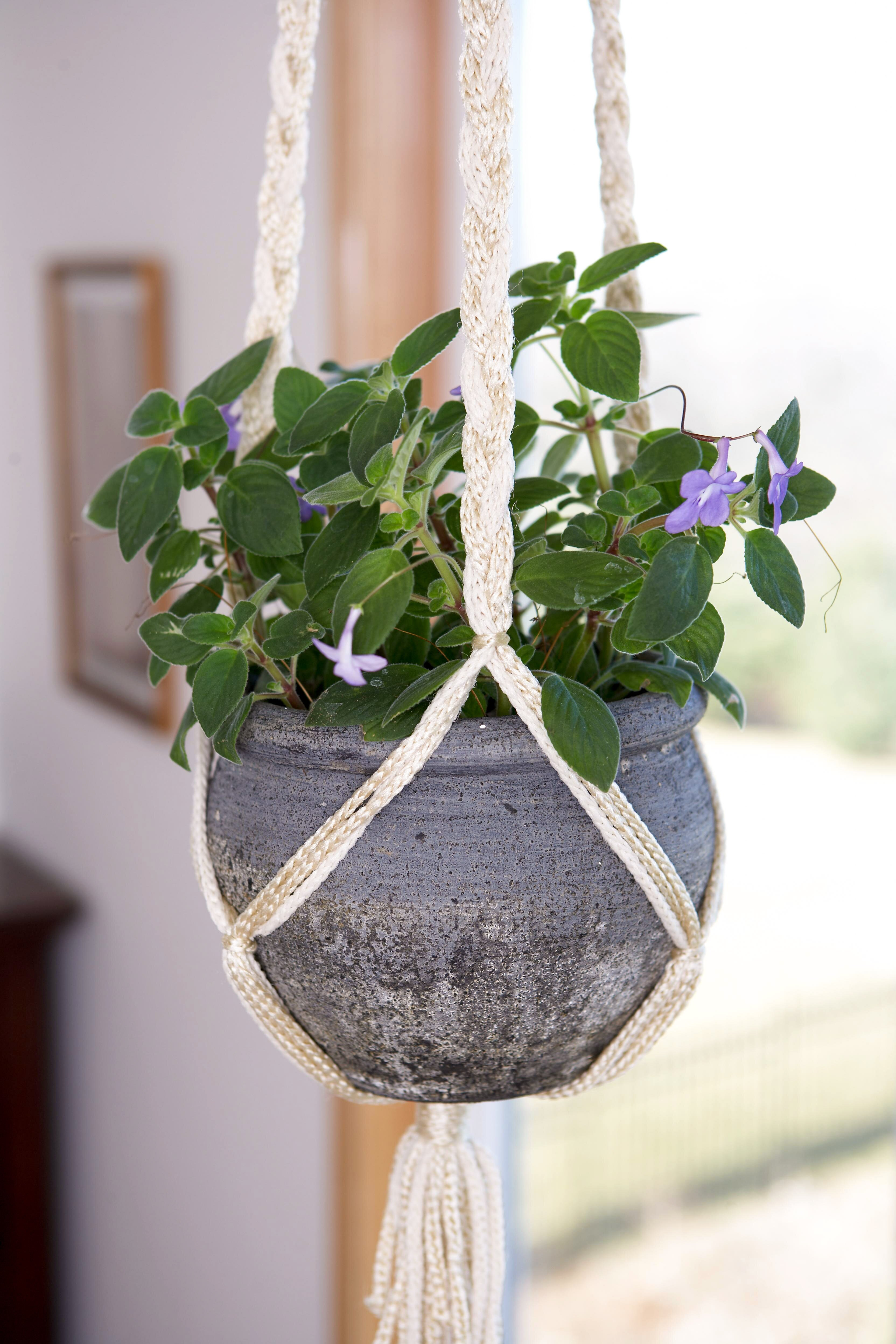 24 Flowering Plants That Can Grow Indoors on bonsai leaves, fall color leaves, poinsettia leaves, leaf leaves, wreath leaves, green leaves, fossil leaves, cactus leaves, plants leaves, hedge leaves, snow leaves, honeysuckle leaves, wildflower leaves, grass leaves, bulb leaves, moss leaves, fruit leaves, garden leaves,
