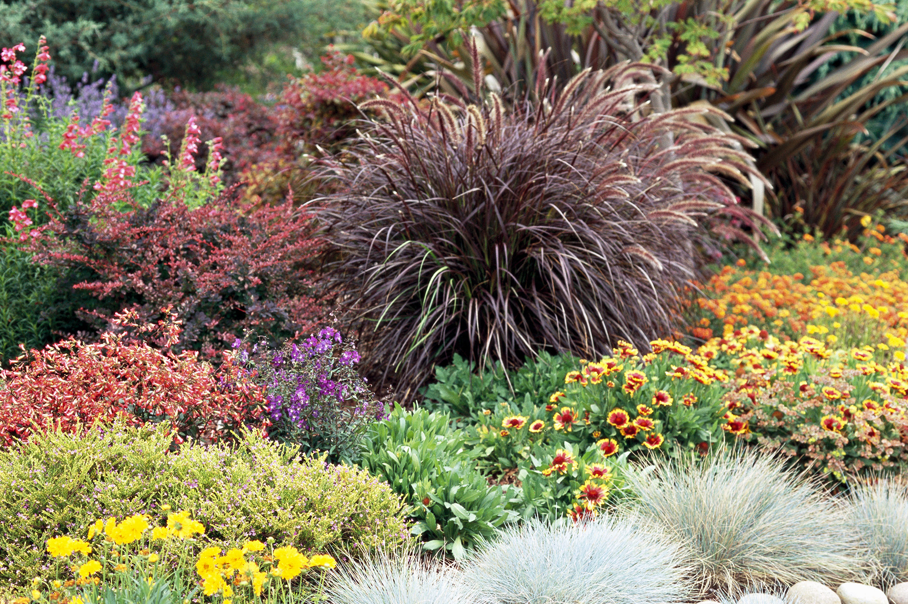 23 Top Ornamental Grasses Better Homes Gardens