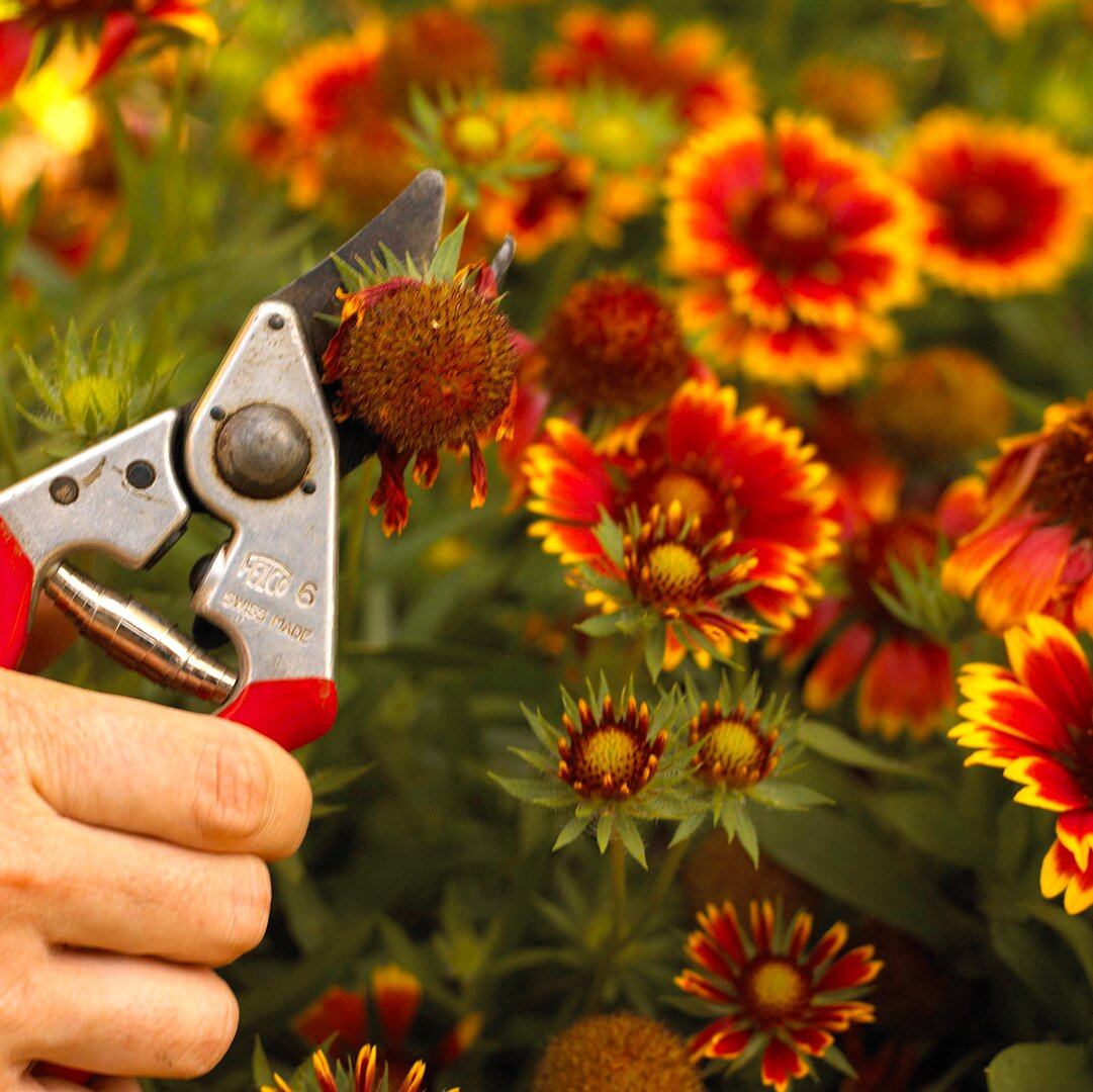 trimming flowers