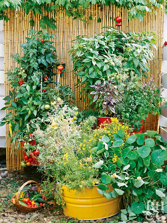 vertical garden with tomatoes, basil, and pepper
