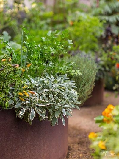 How to Grow Parsley, Indoors or Outside | Better Homes & Gardens