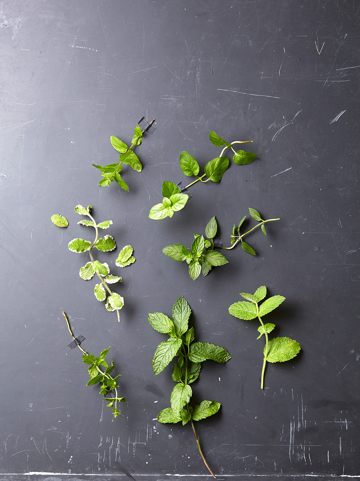 sprigs of insect repelling plants on gray slate table