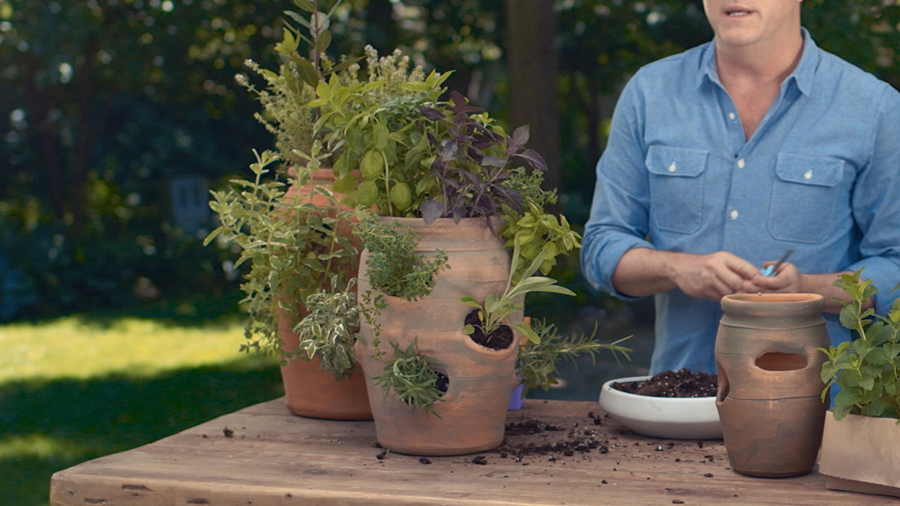 How to Grow Herbs in a Strawberry Planter