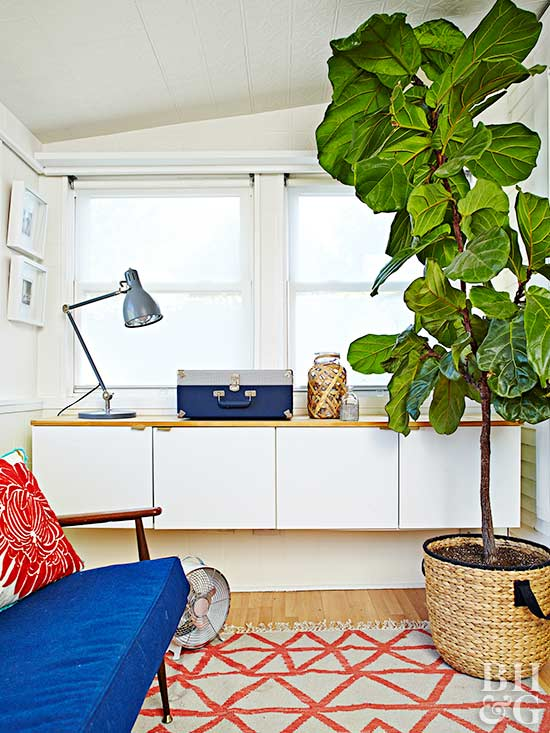 small office, plant, area rug