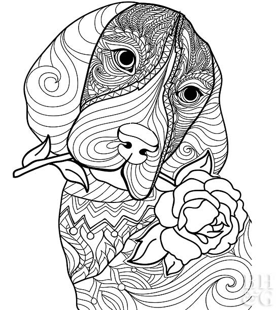 24 Free Pet Coloring Pages Better Homes Gardens
