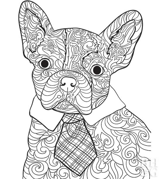 Bulldog coloring page | Free Printable Coloring Pages | 611x550