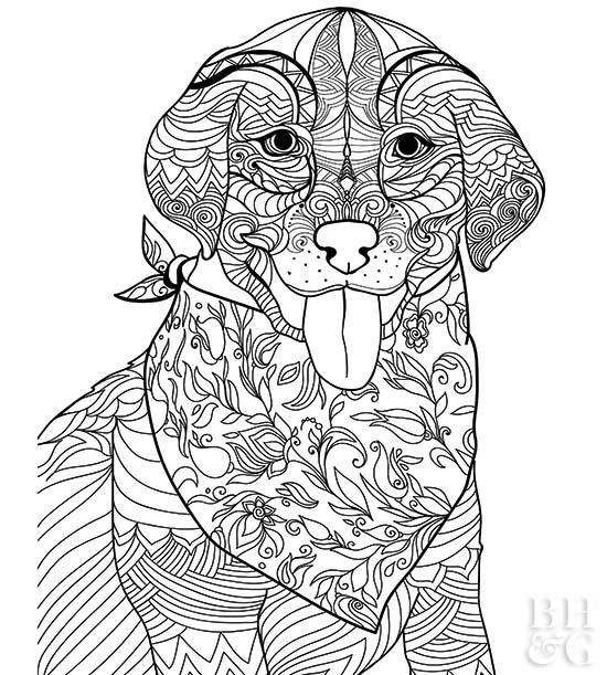 Littlest Pet Shop Coloring Pages for Kids - Free Printables | 611x550