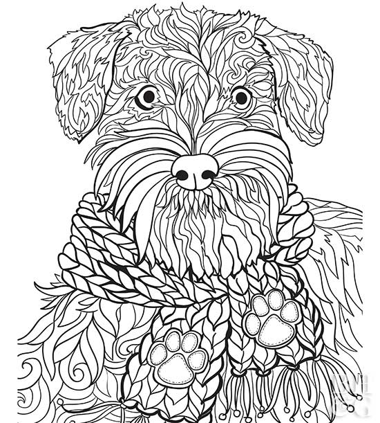 schnauzer dog coloring page