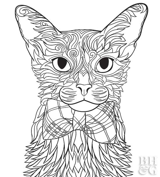 abyssinian cat coloring page