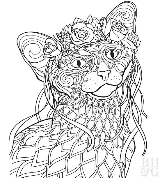 oriental shorthair cat coloring page