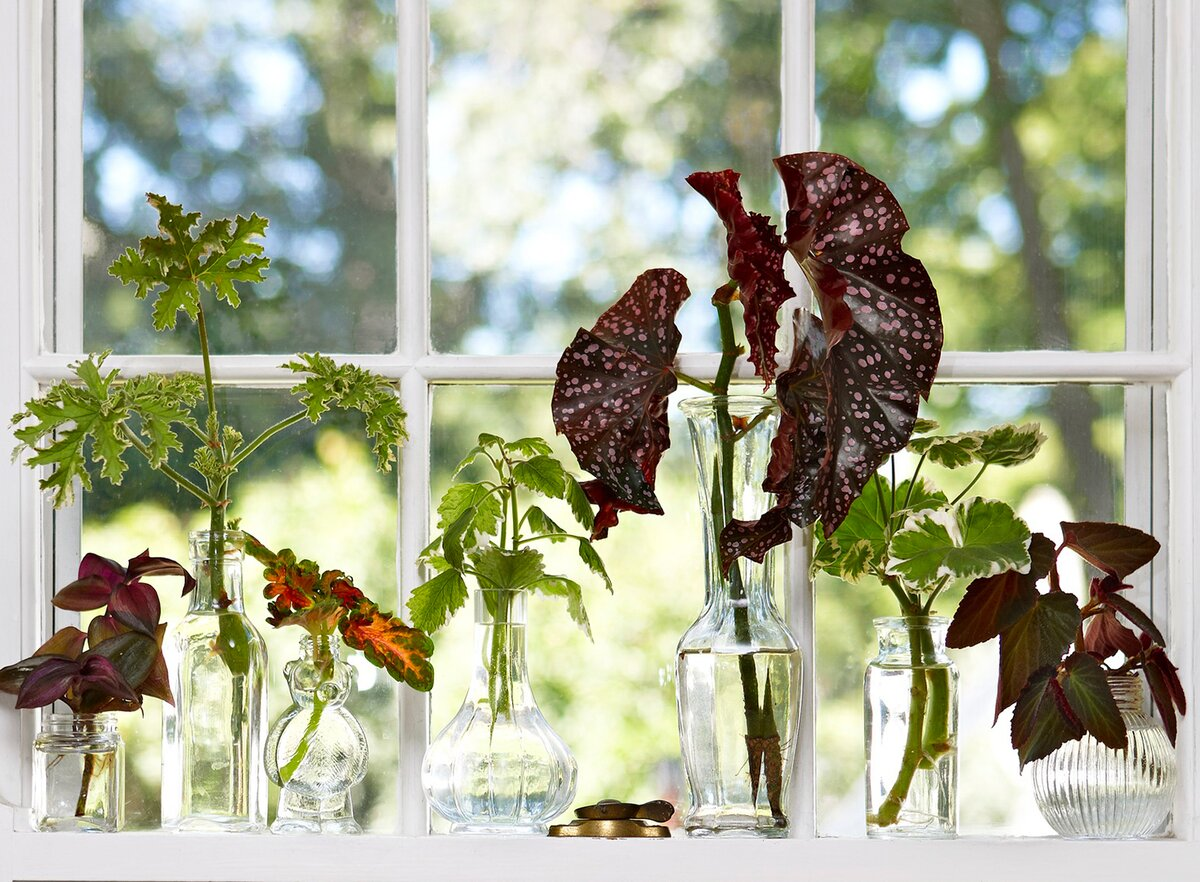 How To Grow Plants From Stem Cuttings Better Homes Gardens