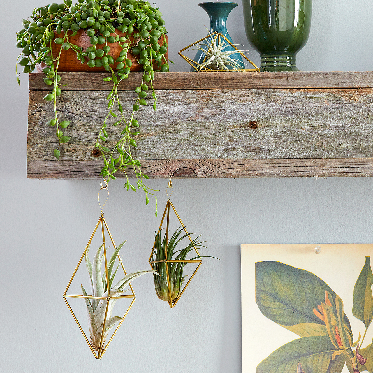 rustic shelf and hanging brass air plant holders