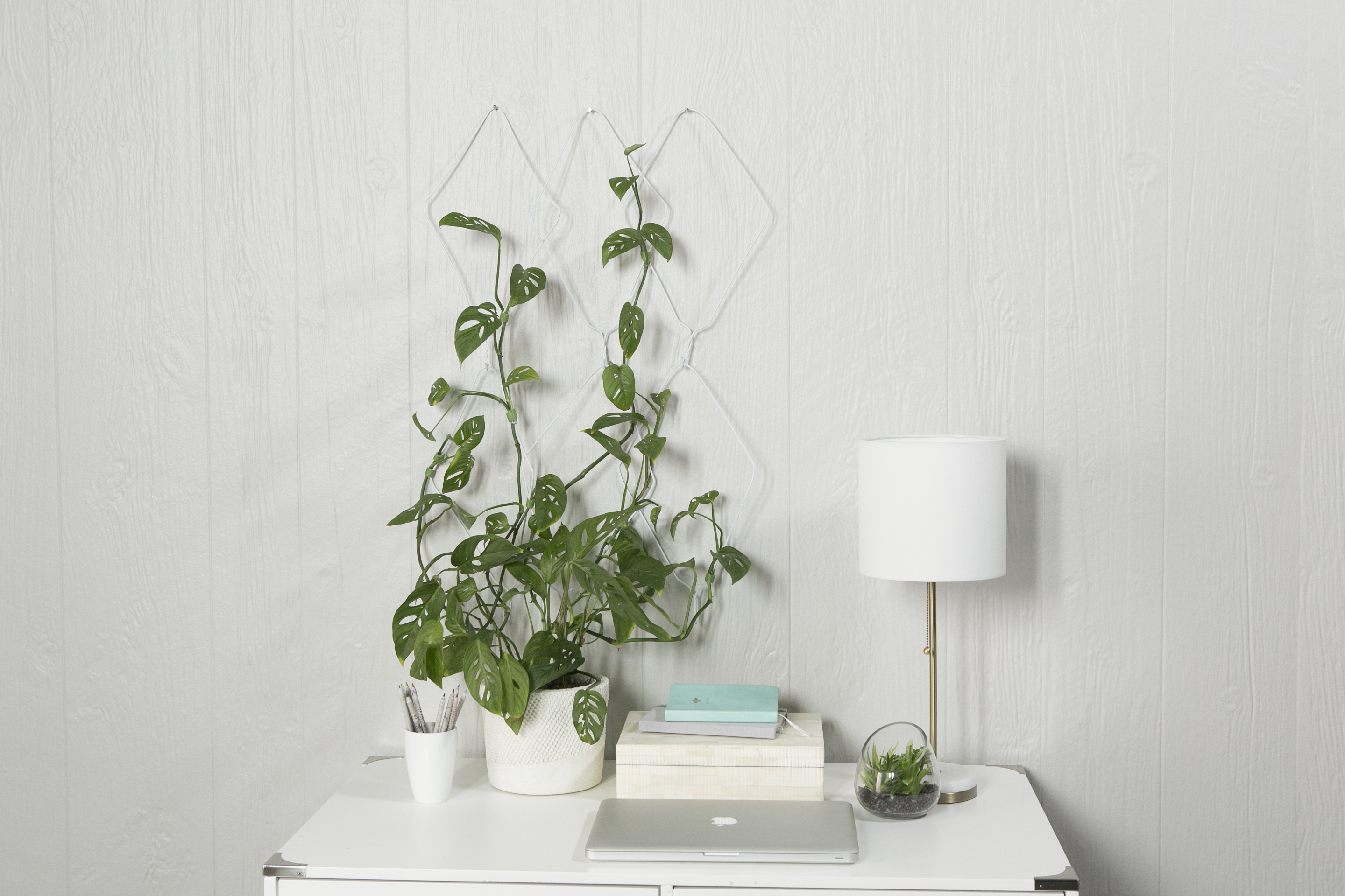 Trailing Plant Wall Hanger