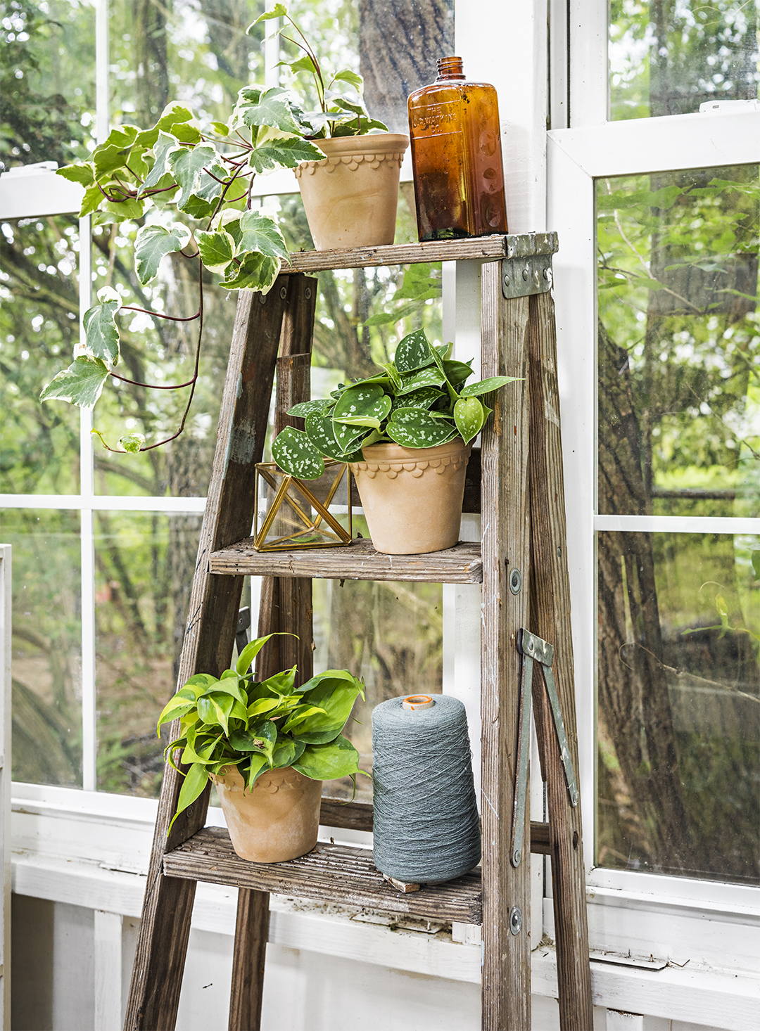 old ladder used as a stand for plants