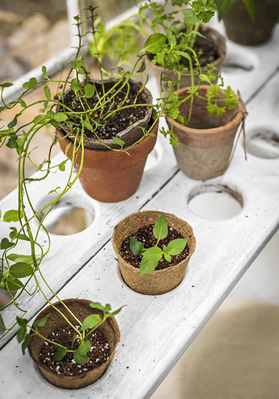 DIY seedling worktable with pots and plants
