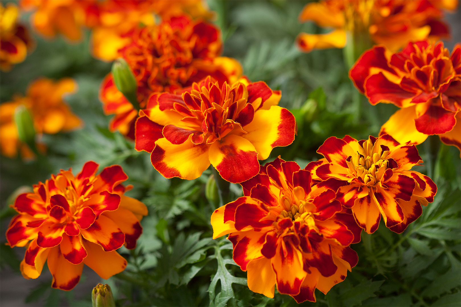 red orange flowers bright colorful