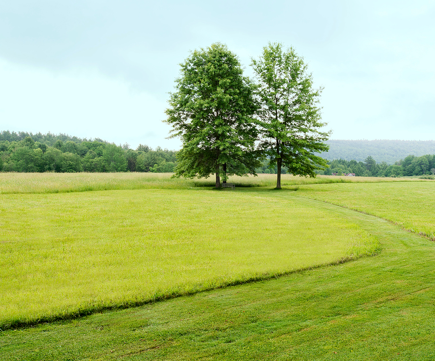 open meadow with mowed path and trees