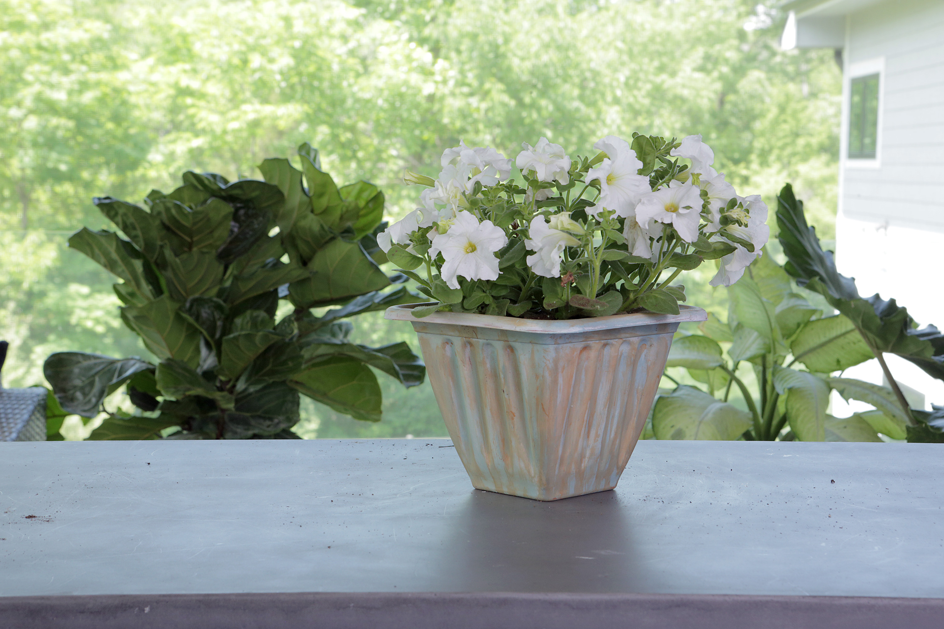 plant in chalk painted pot
