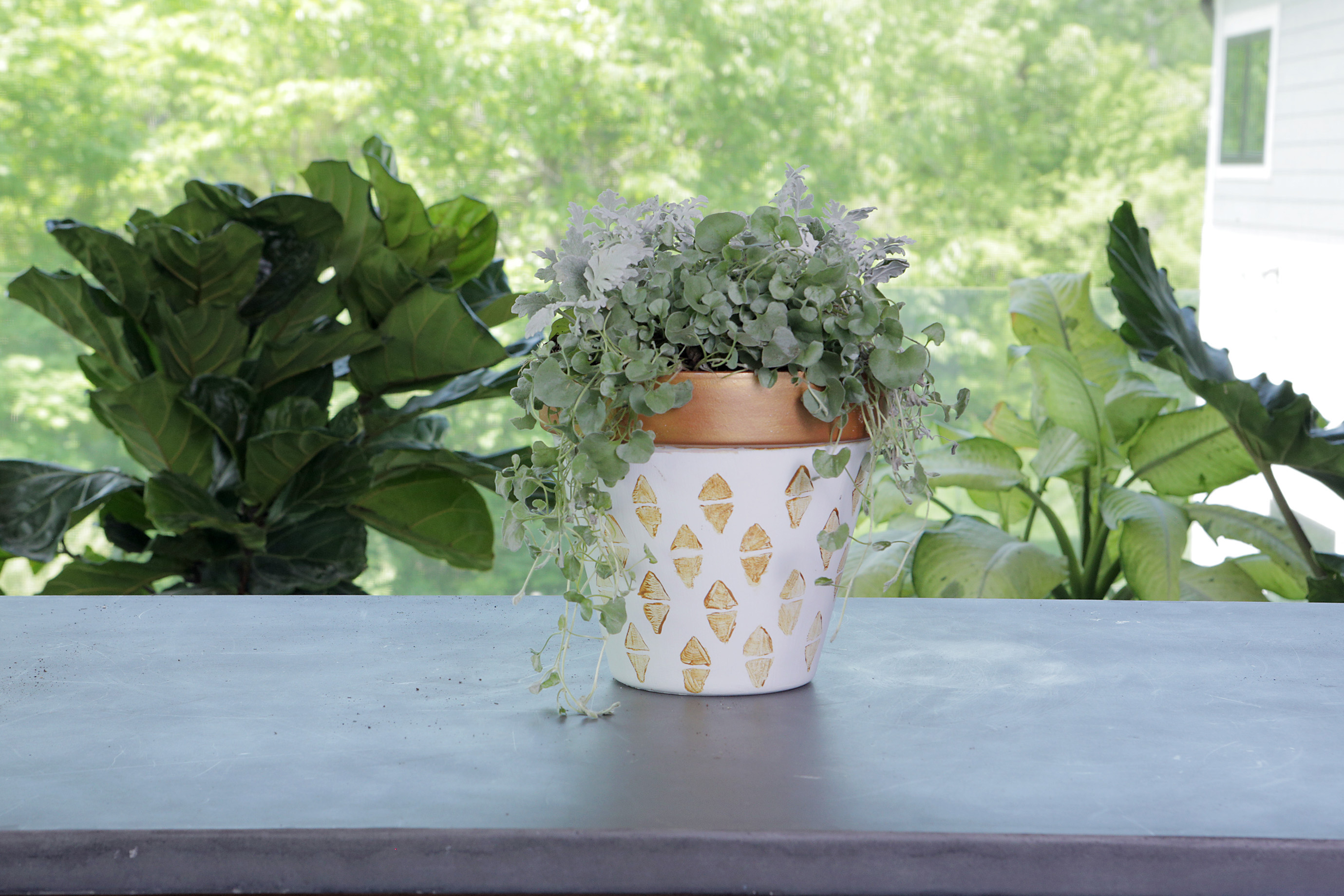 plants in stamped pot