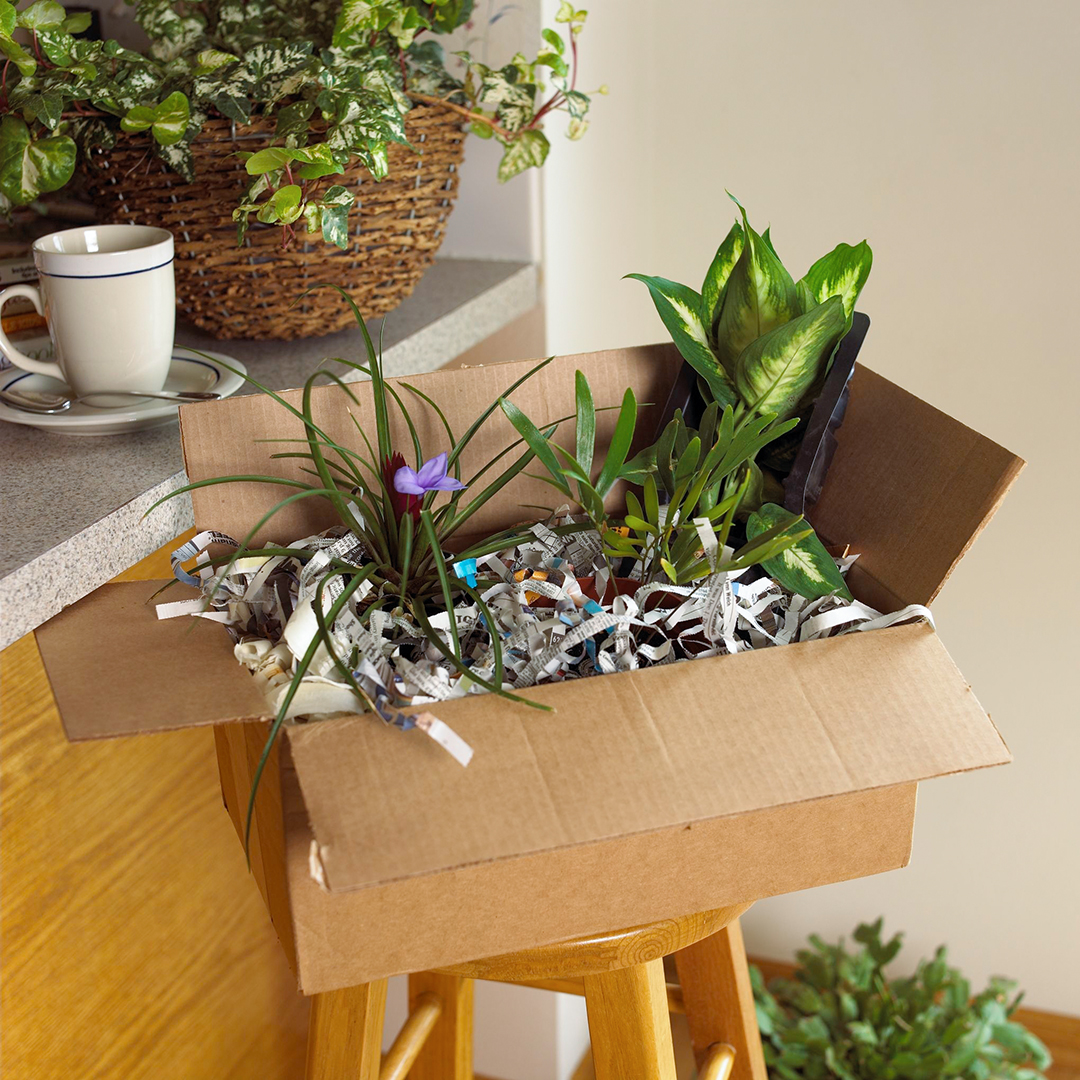 plants and flower with subscription box