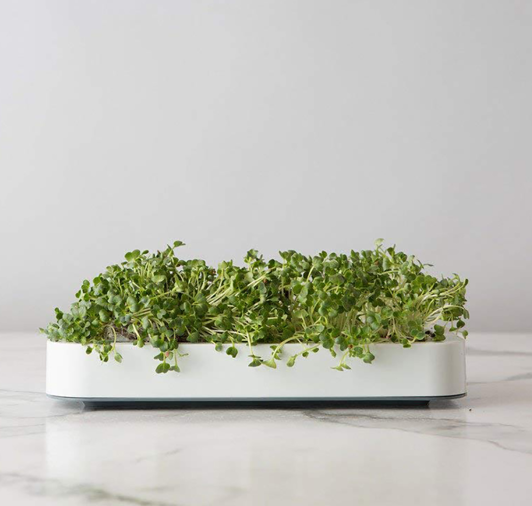 Chef'n Microgreens Grower