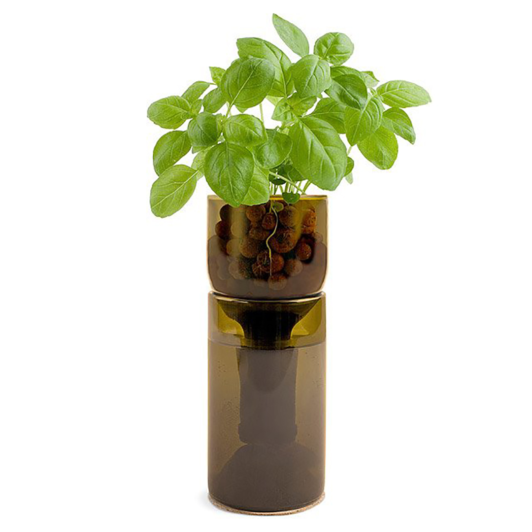 Bottle Herb Garden