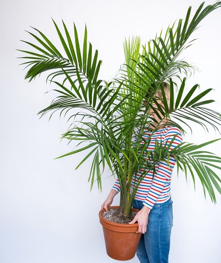 woman holding large palm houseplant in terra-cotta pot