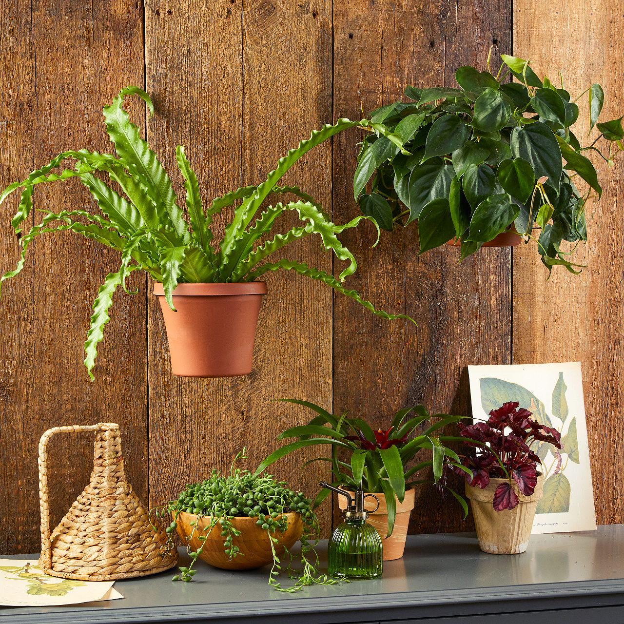 wood plank wall with hanging plants