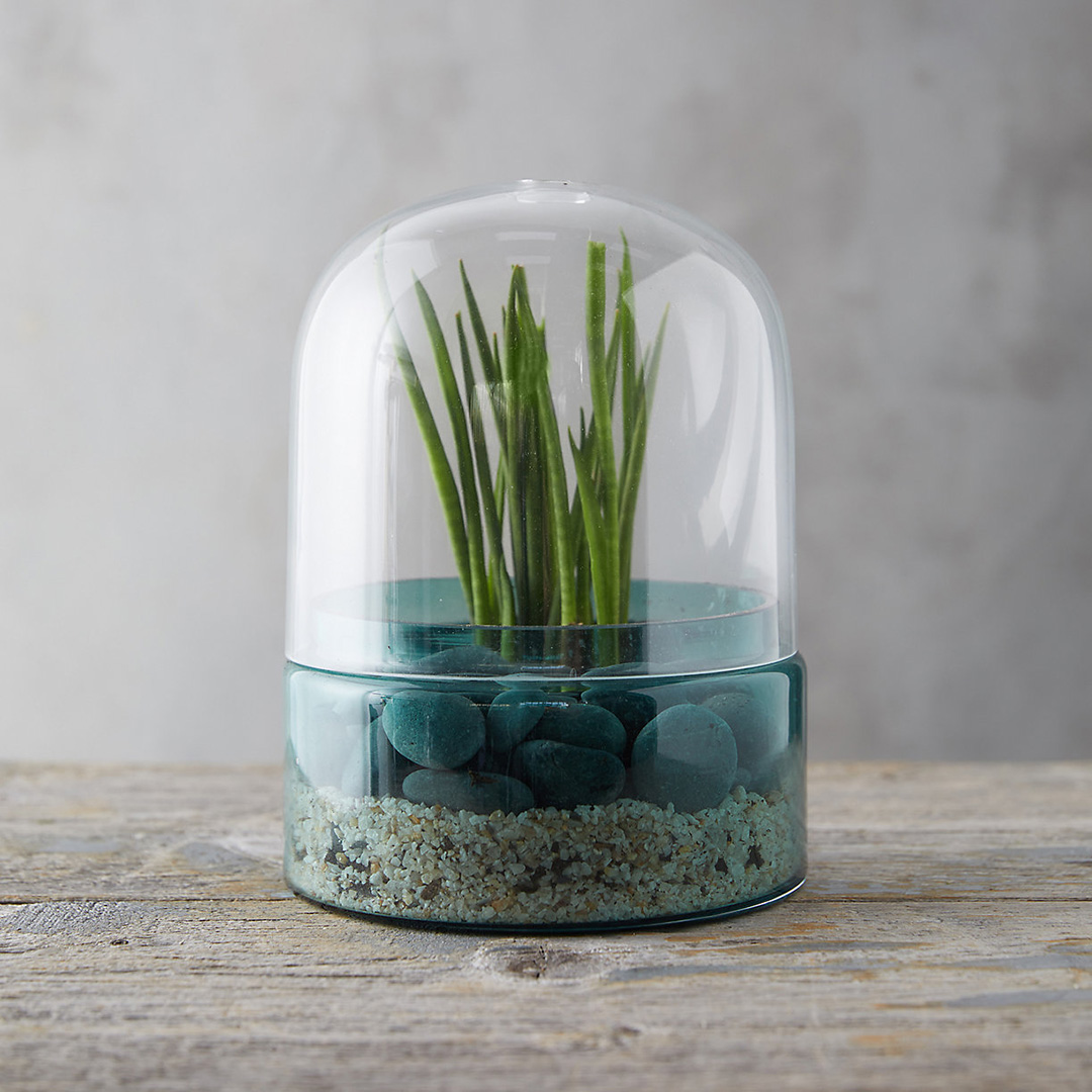 Glass cloche terrarium with turquoise base and clear dome, filled with sand, rocks and a grass-like succulent