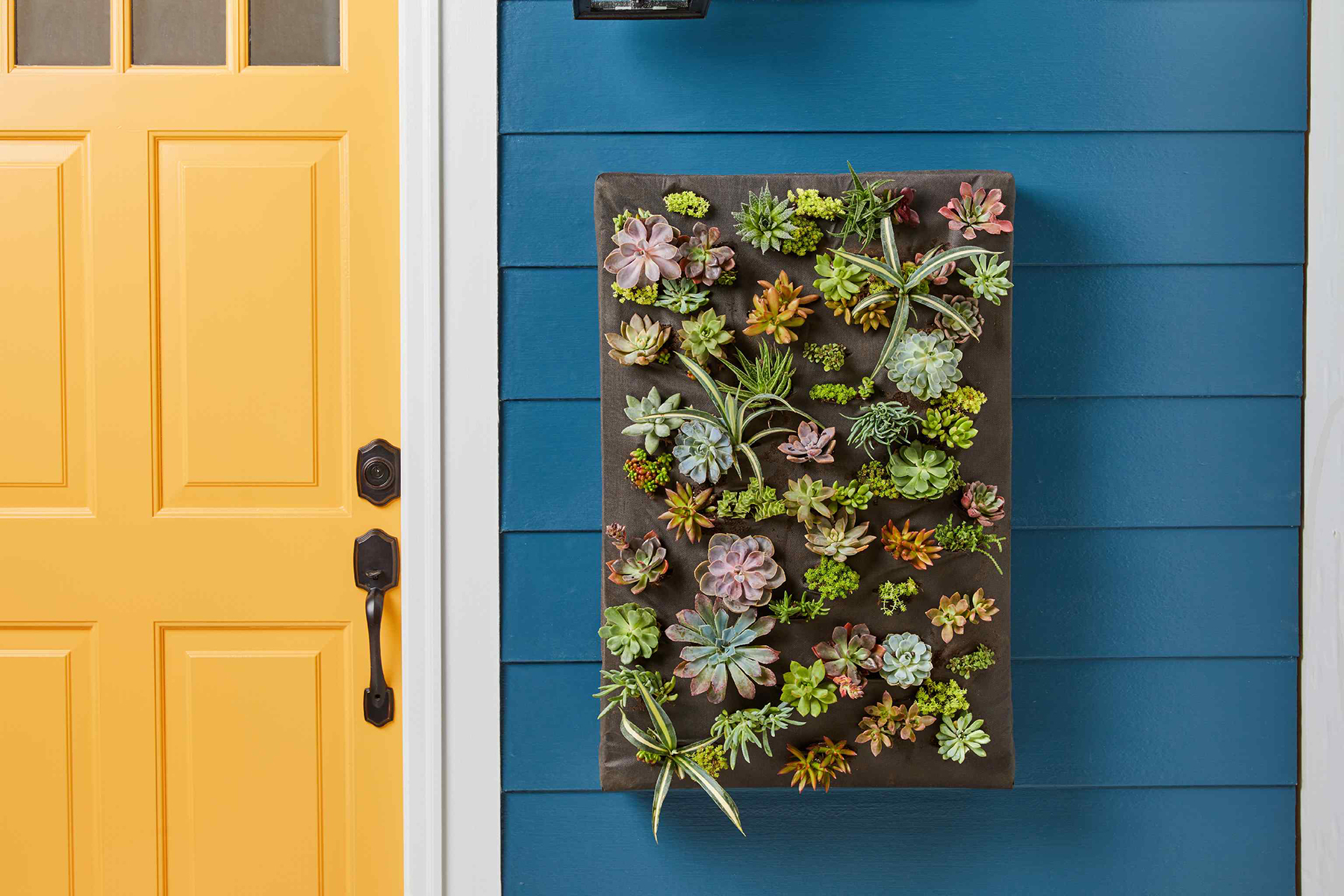 close-up finished living wall on blue house exterior yellow door