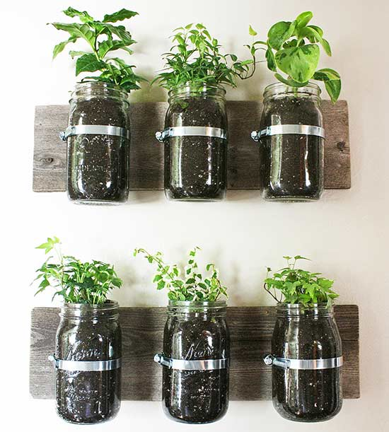 Mason Jar Wall Planter- one time use only blogger image