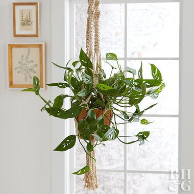 Close Up Of Hanging Plant