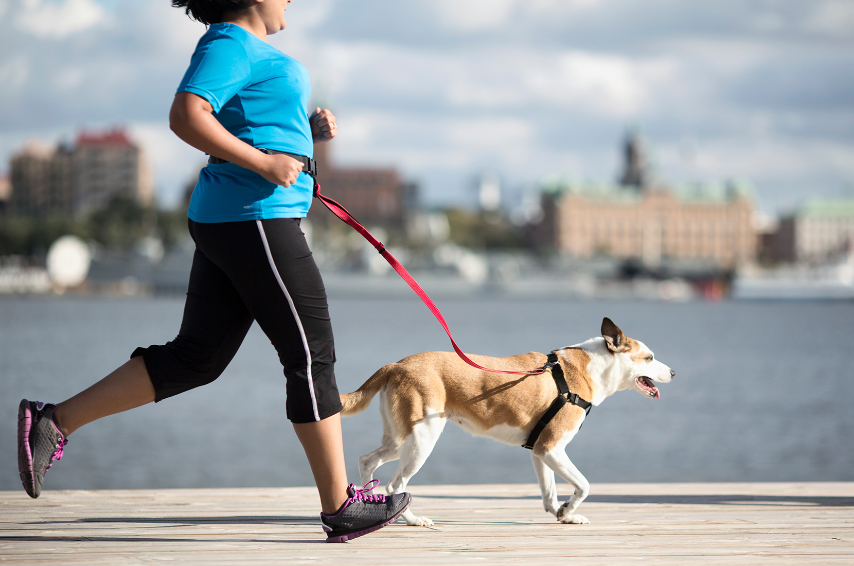 woman running with dog using a harness and leash attached at her waist