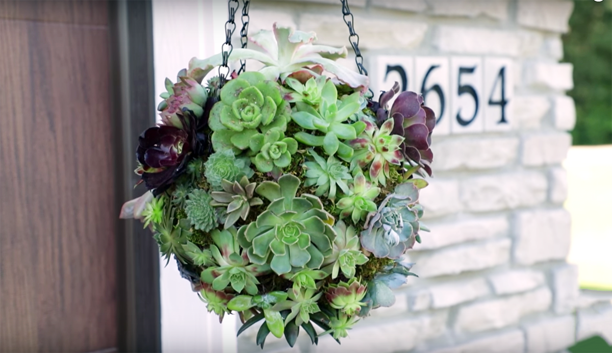 hanging succulent ball on front porch