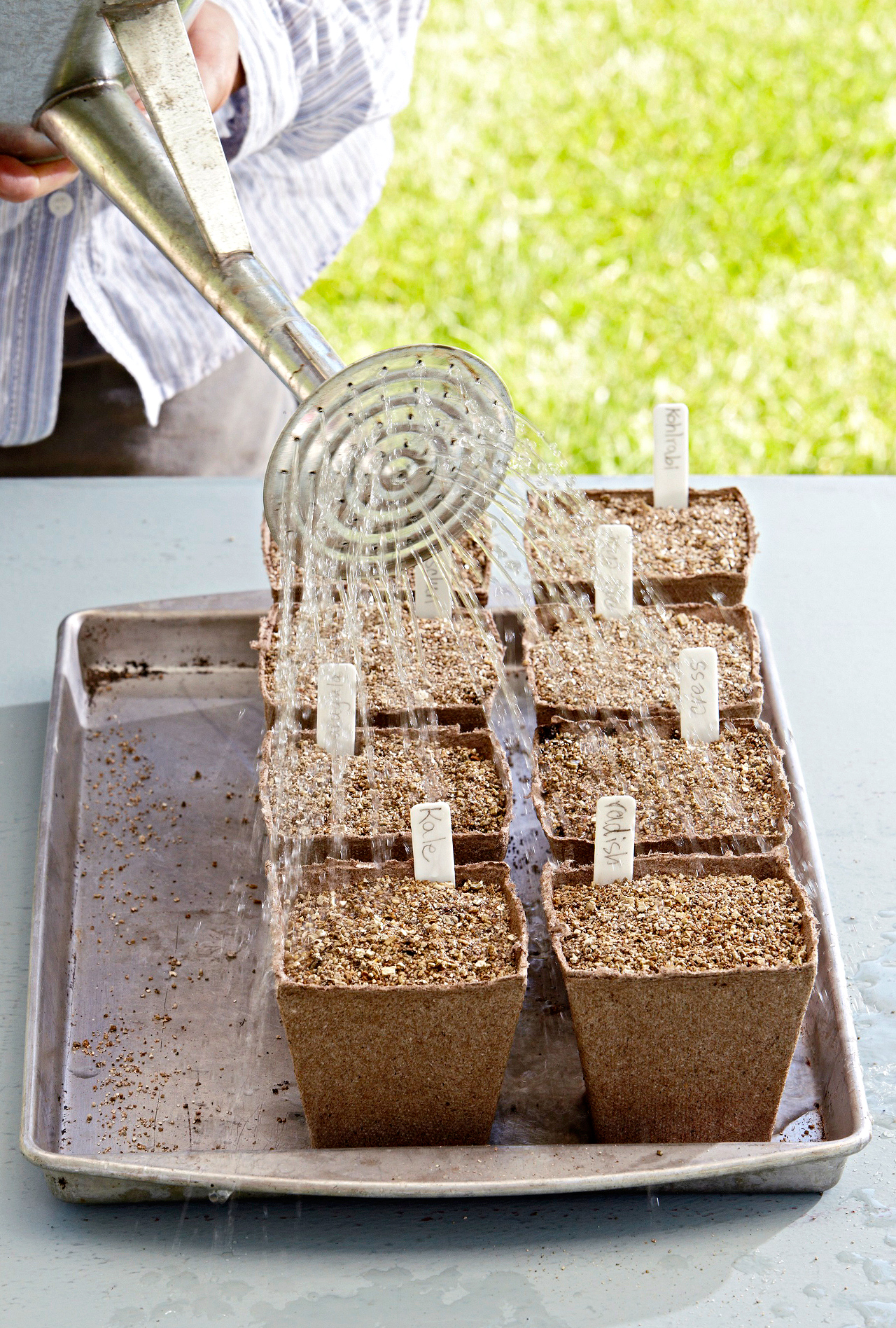 gently shower seeds with water after sown