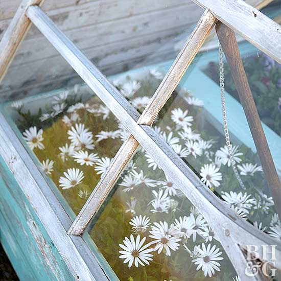 cold frame made from old windows flowers close up