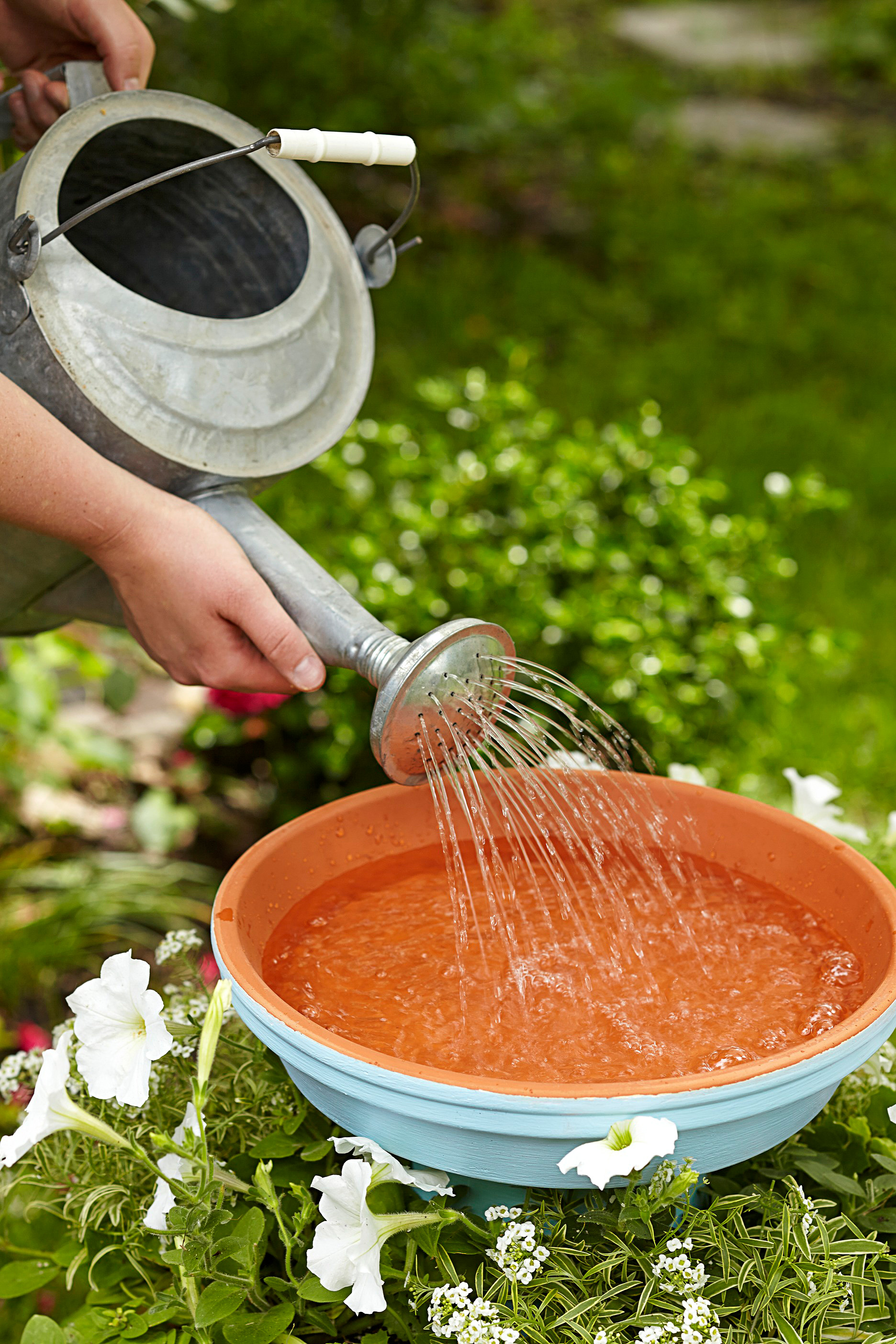 filling water in bird bath
