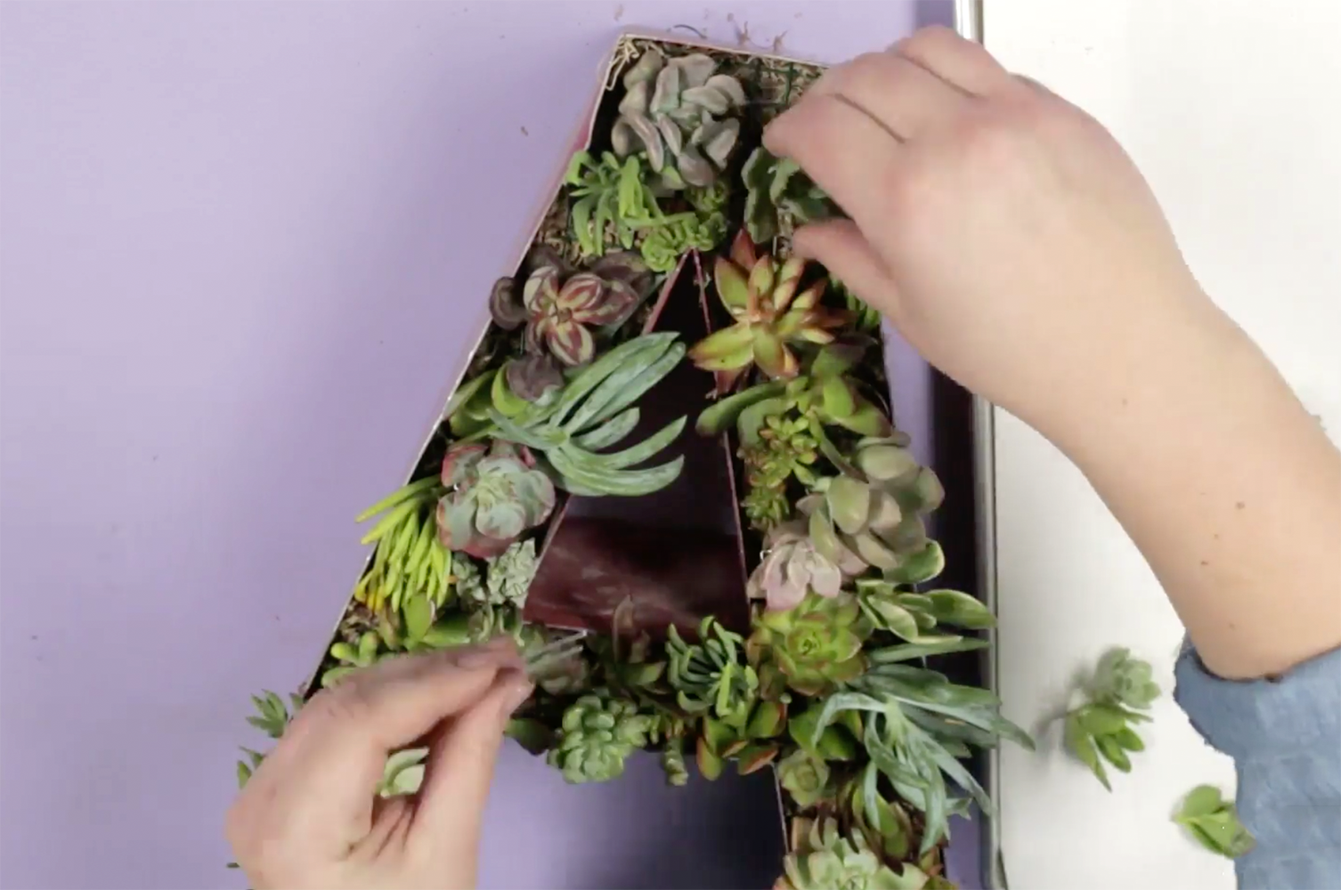filling metal letter with succulents