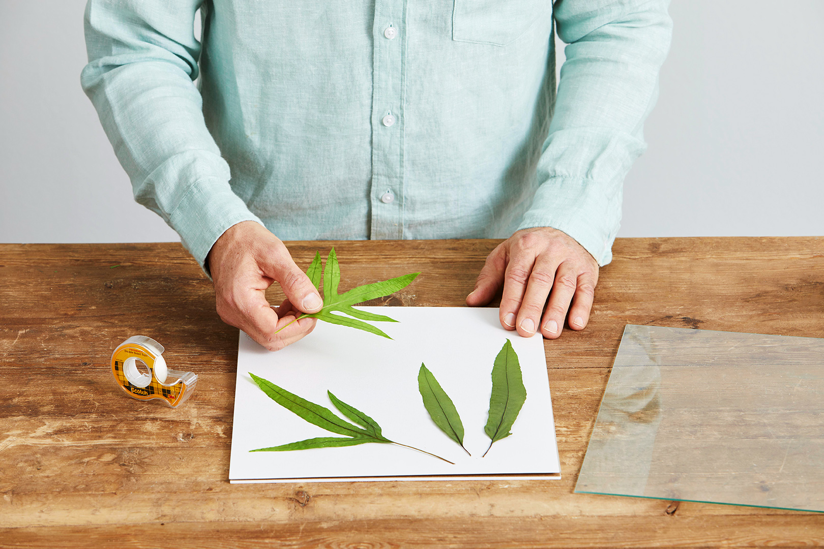 tape plant clipping on white paper for framing