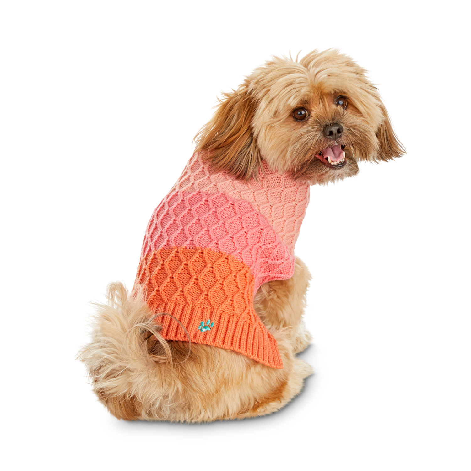 Dog wearing pink ombre dog sweater