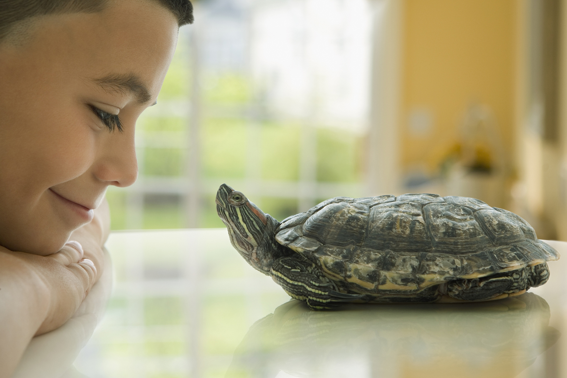 boy looking at his pet turtle