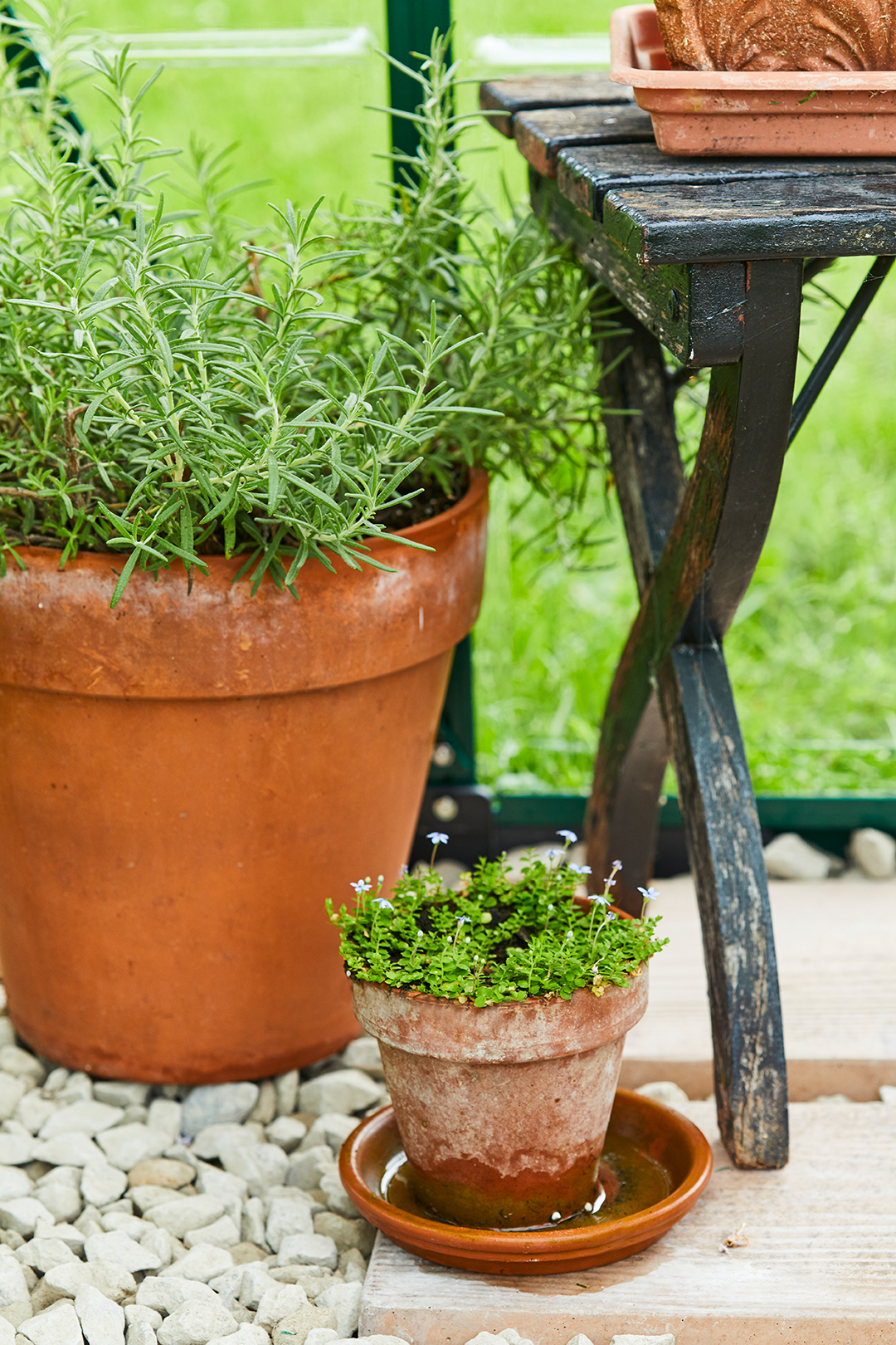 large and small potted plants