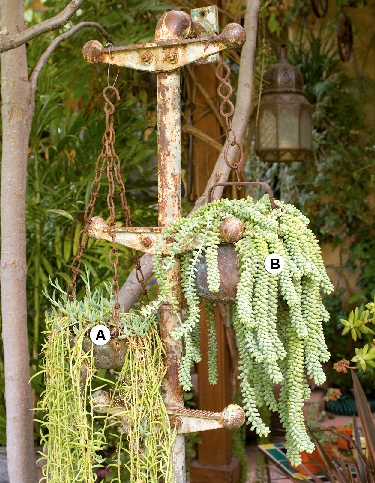succulents in metal plant stand