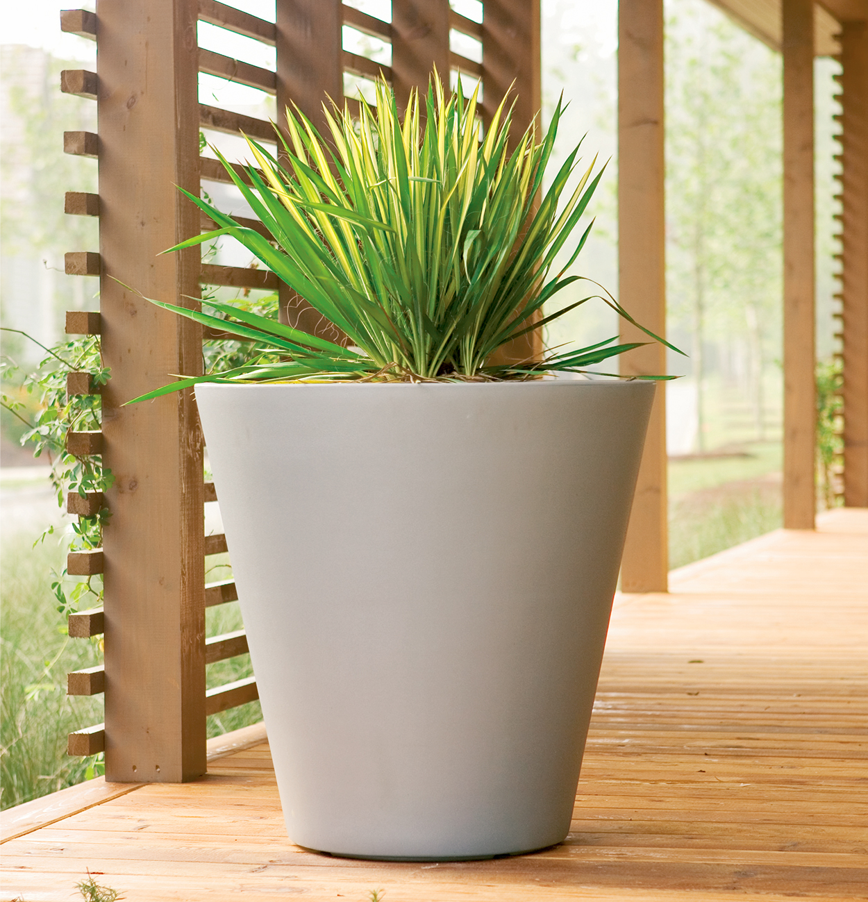 Yucca in container on porch