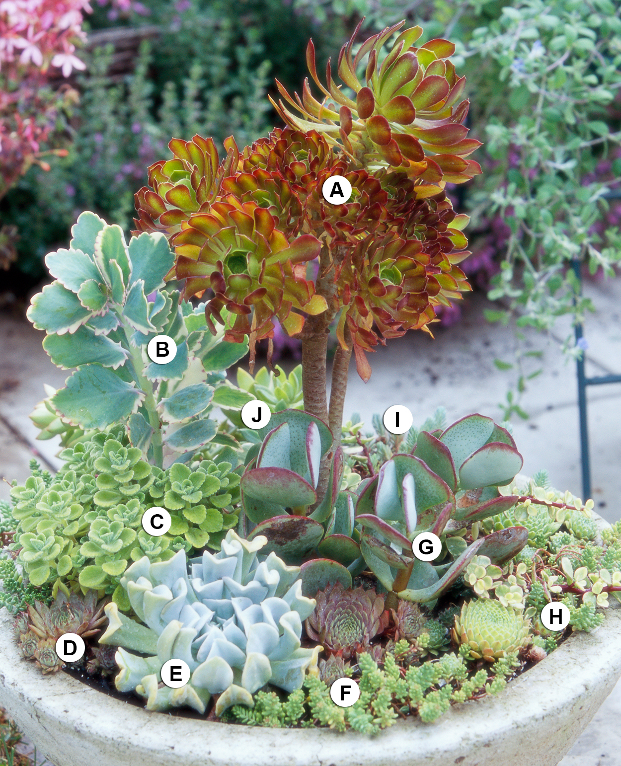 Succulent collection in stone trough