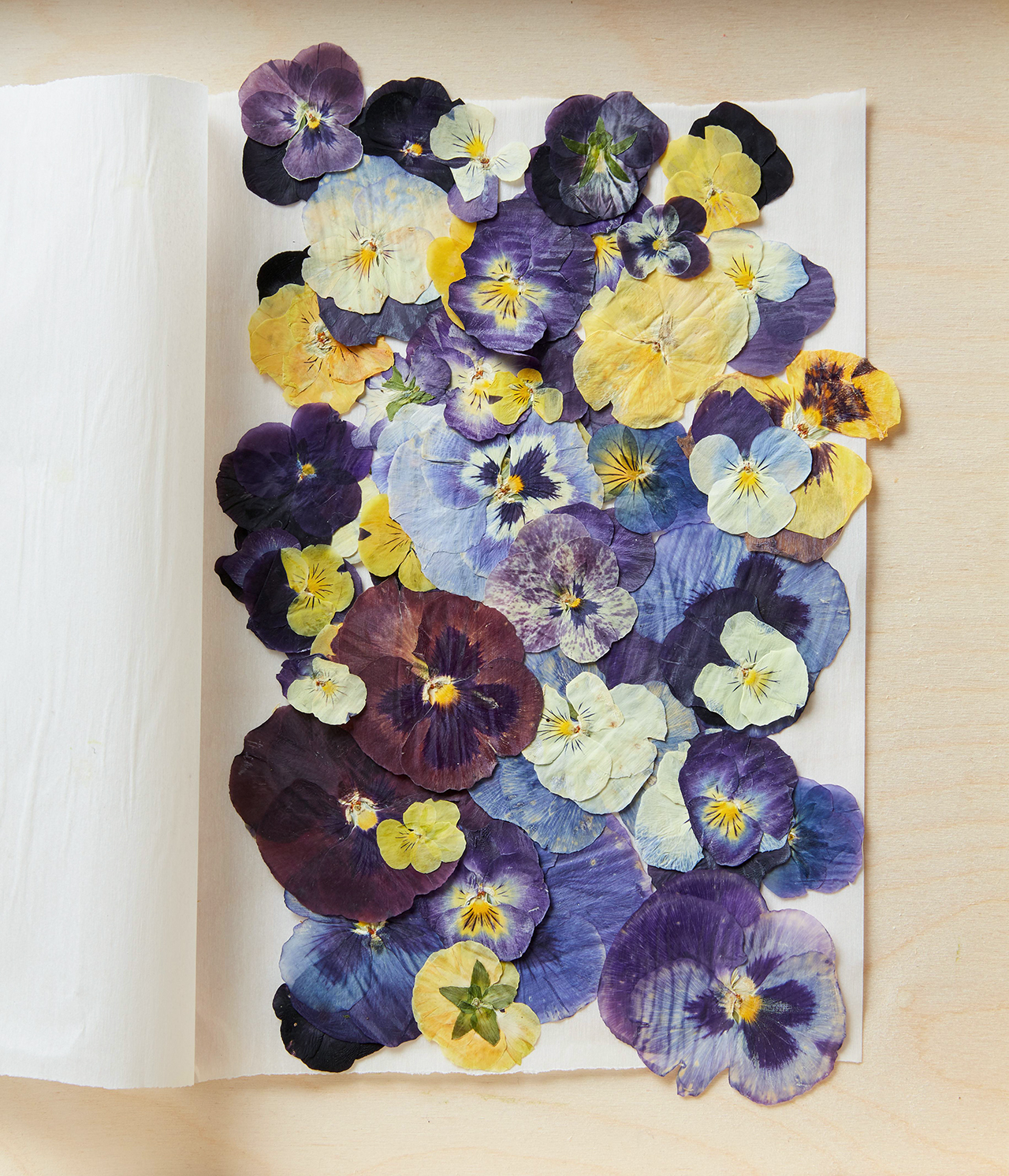 pressed purple white and yellow flowers with paper sheets