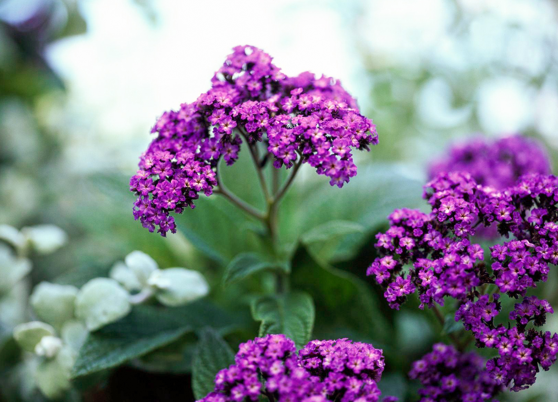 Top Annual Flowers To Grow In The Shade Better Homes Gardens