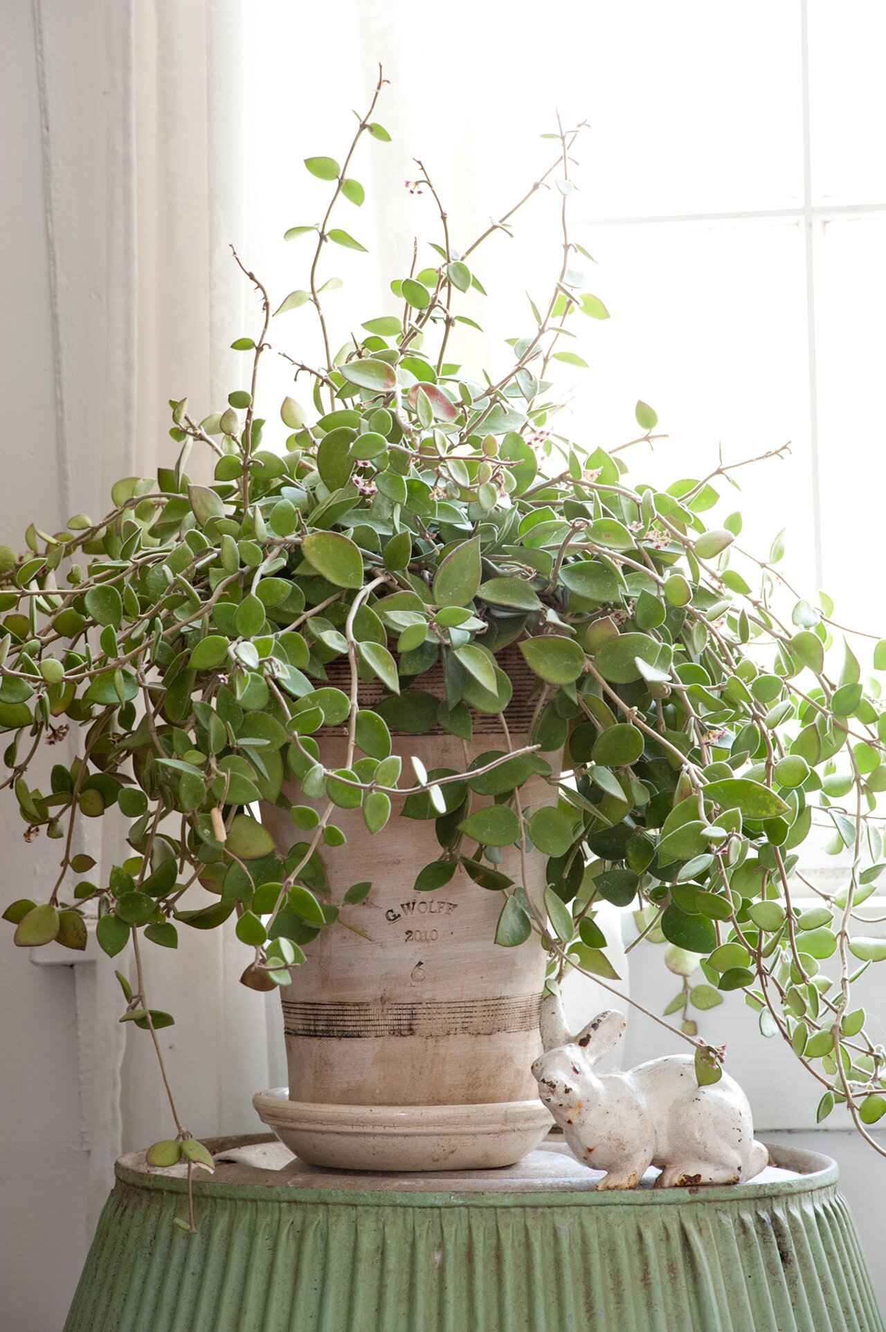23 of Our Favorite Low-Light Houseplants Red Vining Houseplants on design red, pots red, flowers red, cactus red, nature red, peppers red, ornamental grasses red, mums red, berries red, orchids red, animals red,