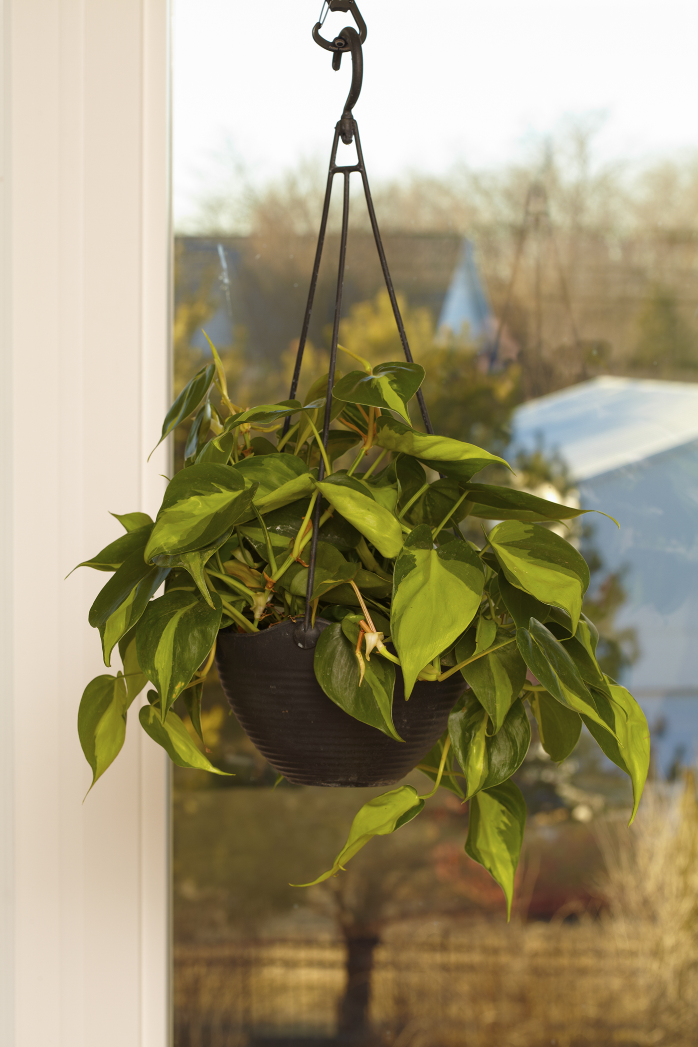 17 Plants Perfect For Hanging In Your Home Better Homes Gardens